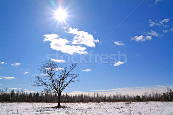 Stock fotó: Tölgy · tél · mező · égbolt · fa · fa