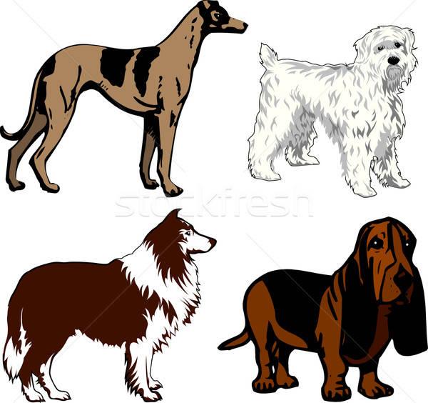 Honden verschillend dieren jonge witte cartoon Stockfoto © BasheeraDesigns