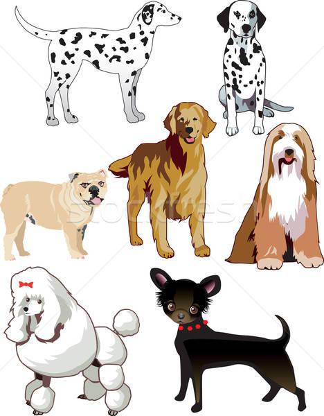 Dogs Stock photo © BasheeraDesigns