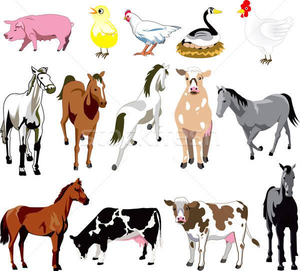 сельскохозяйственных животных вектора 14 птиц млекопитающих лошади Сток-фото © BasheeraDesigns