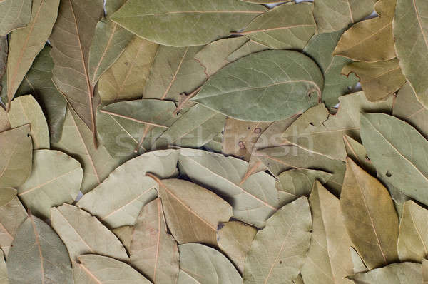 Bay leaves  Stock photo © bayberry