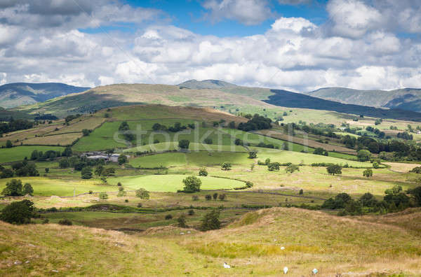 Sunlight patches in Cumbria, UK Stock photo © bayberry