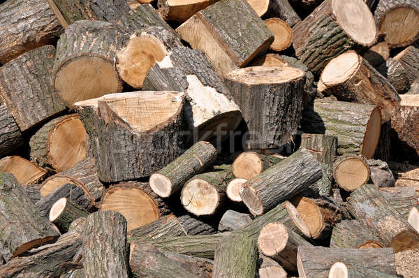 Wooden logs  Stock photo © bayberry