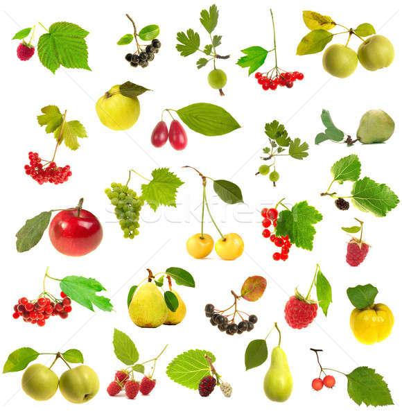 Owoców ulotka biały drzewo czerwony czarny Zdjęcia stock © bazilfoto