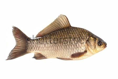Izolált fehér víz halászat eszik állat Stock fotó © bazilfoto