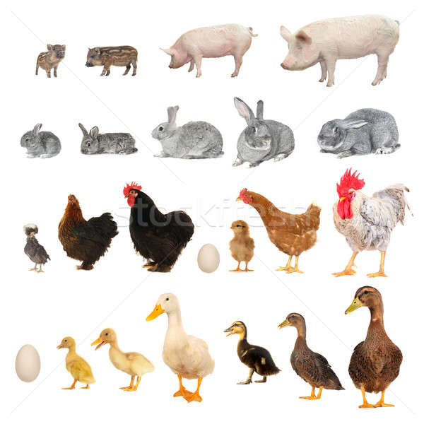 animals        Stock photo © bazilfoto