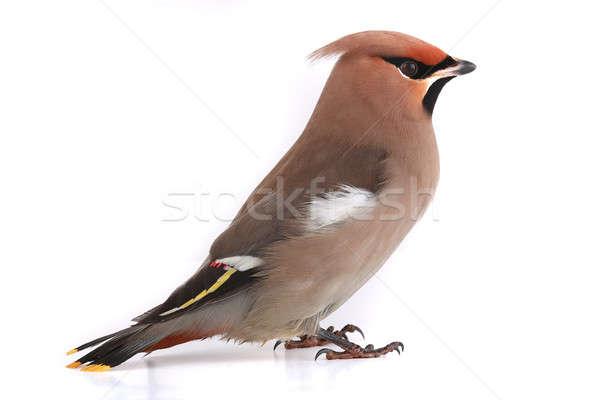 Bohemien Hintergrund Vogel Feder gelb Umwelt Stock foto © bazilfoto