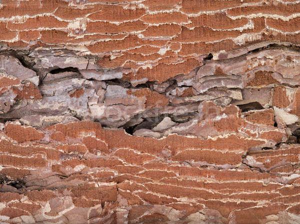 brown old texture Stock photo © bazilfoto