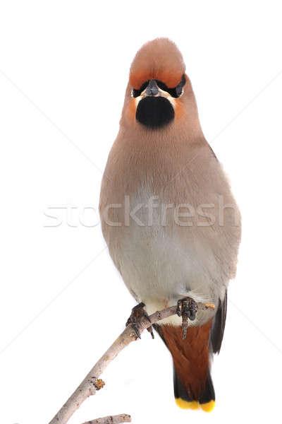 Bohem arka plan kuş tüy sarı çevre Stok fotoğraf © bazilfoto