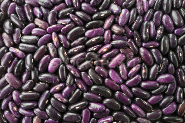 haricot violet; Stock photo © bazilfoto