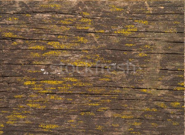 ブラウン 古い テクスチャ ツリー 木材 抽象的な ストックフォト © bazilfoto
