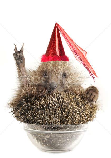 Hedgehog Stock photo © bazilfoto