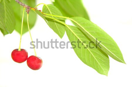 Red cherry Stock photo © bazilfoto