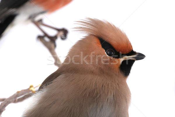 Ritratto sfondo uccello piuma giallo Foto d'archivio © bazilfoto