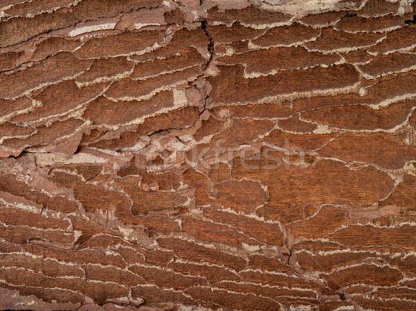 Barna öreg textúra ugatás fa fa Stock fotó © bazilfoto