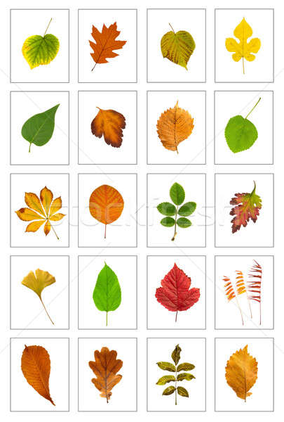 Leaf Stock photo © bazilfoto