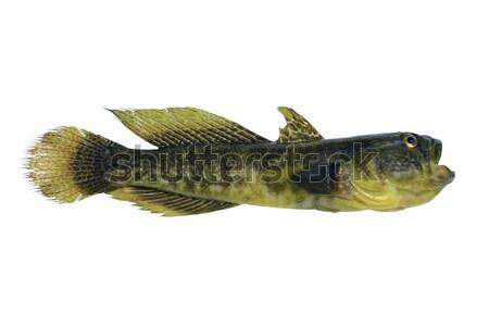 Kereste arka plan balık tutma erkek taze zemin Stok fotoğraf © bazilfoto