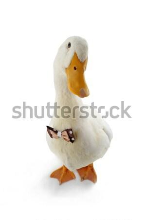 Biały kaczka piękna zwierząt kolor studio Zdjęcia stock © bazilfoto