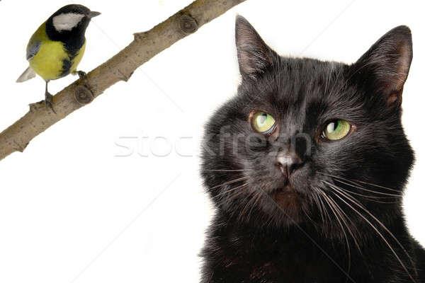 cat Stock photo © bazilfoto