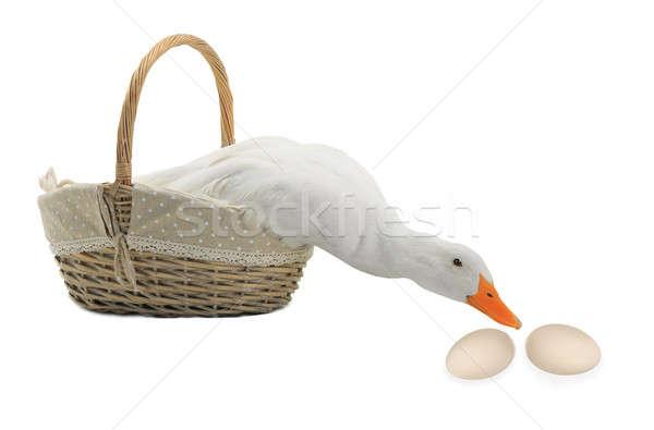 Kacsa kosár fehér tojás szépség farm Stock fotó © bazilfoto