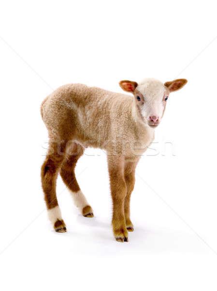 Kicsi birka fehér Biblia portré állat Stock fotó © bazilfoto