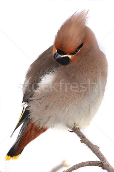 Boheems achtergrond vogel veer Geel milieu Stockfoto © bazilfoto