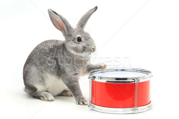 rabbit sitting Stock photo © bazilfoto
