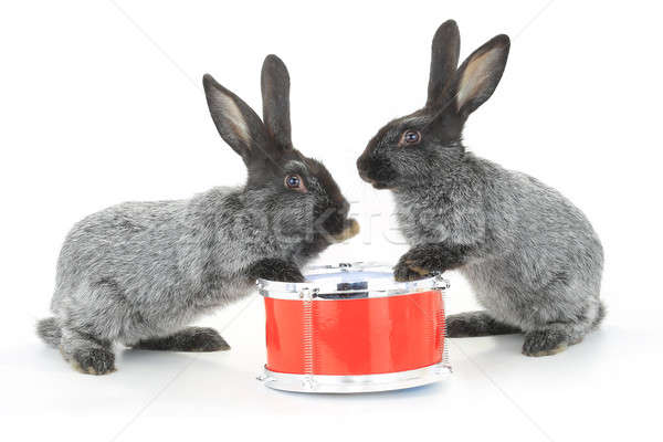 two rabbit sitting Stock photo © bazilfoto