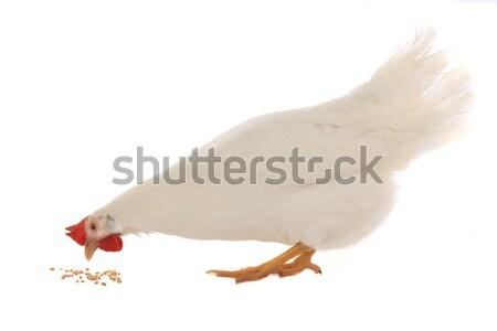 ducks Stock photo © bazilfoto