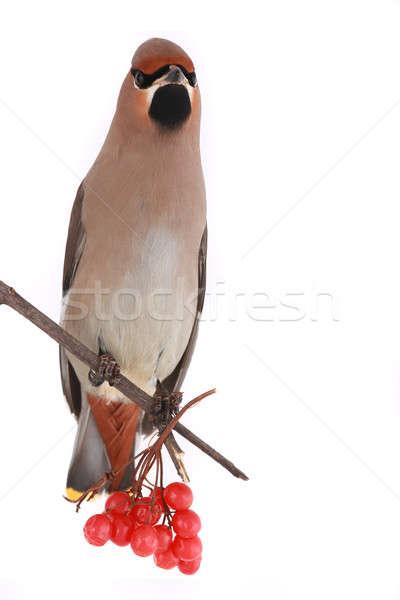 Bohém háttér madár toll citromsárga környezet Stock fotó © bazilfoto