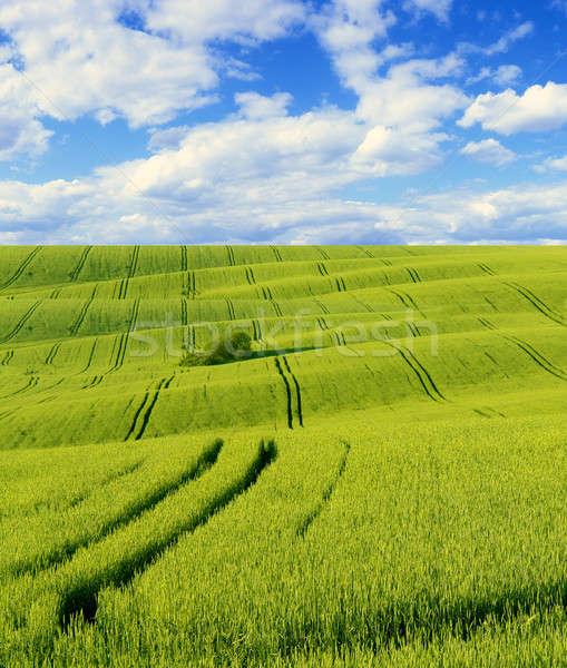 風景 緑 フィールド ツリー 草 自然 ストックフォト © bazilfoto