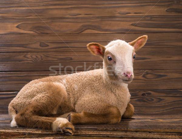 子羊 ブラウン 自然 聖書 ファーム ストックフォト © bazilfoto