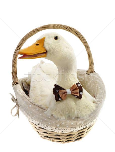 duck  Stock photo © bazilfoto