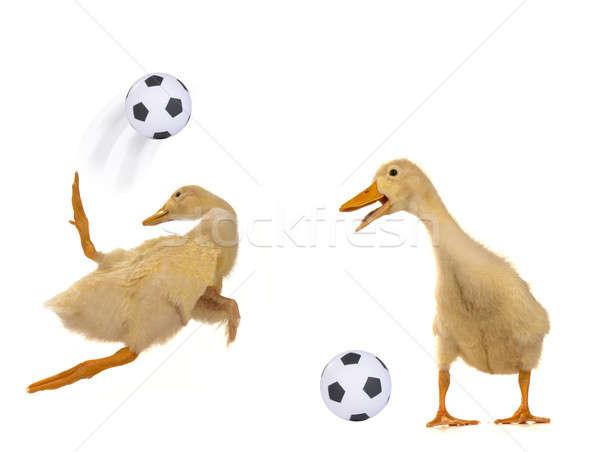 Spelen voetbal witte sport achtergrond springen Stockfoto © bazilfoto