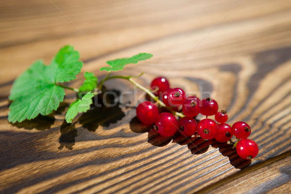 red currant Stock photo © bazilfoto