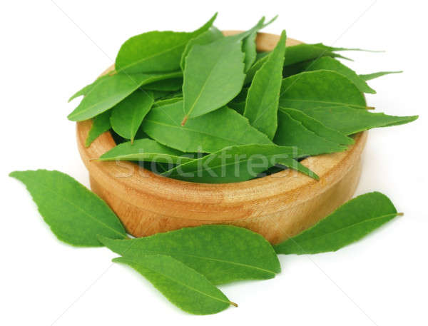 Curry Leaves Stock photo © bdspn