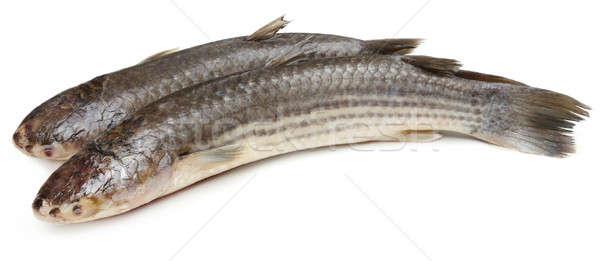 Helyi hal fehér folyó Ázsia izolált Stock fotó © bdspn