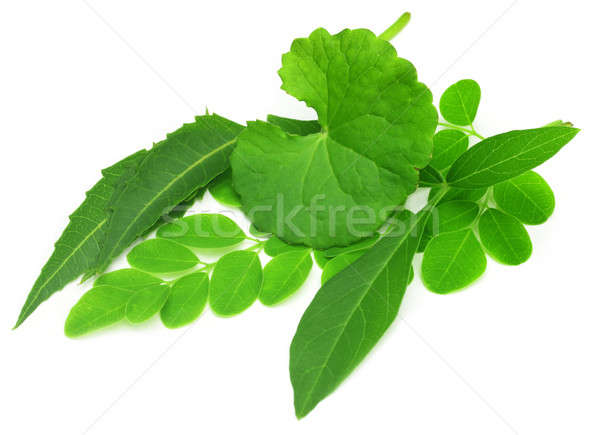 Medicinal herbs Stock photo © bdspn