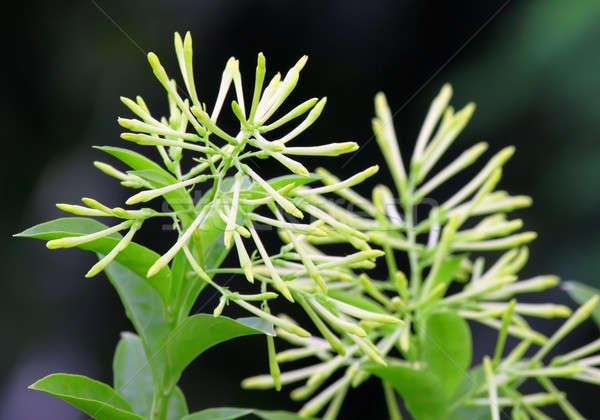 東南アジア 花 自然 グループ 葉 工場 ストックフォト © bdspn
