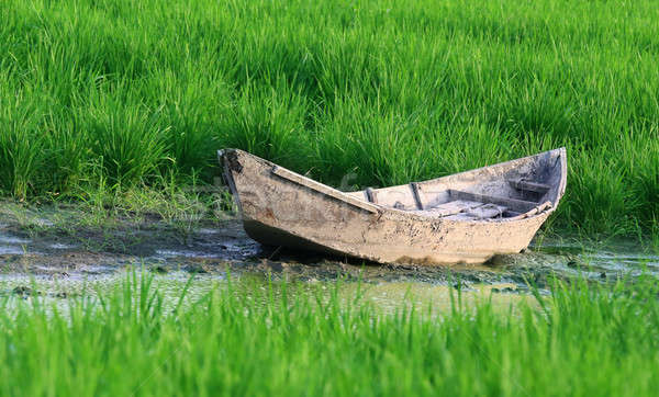Old wooden boat in a paddy field Stock photo © bdspn