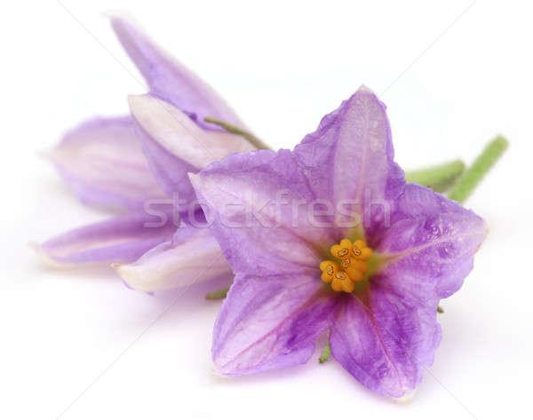 Virág padlizsán szelektív fókusz szépség nyár Ázsia Stock fotó © bdspn