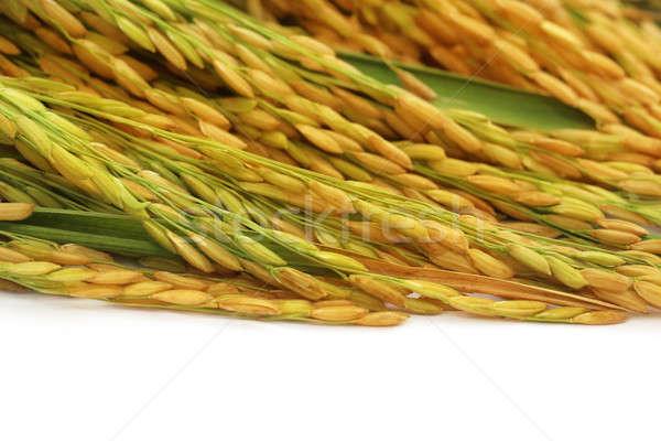 Сток-фото: семян · белый · трава · лет · кукурузы · цвета