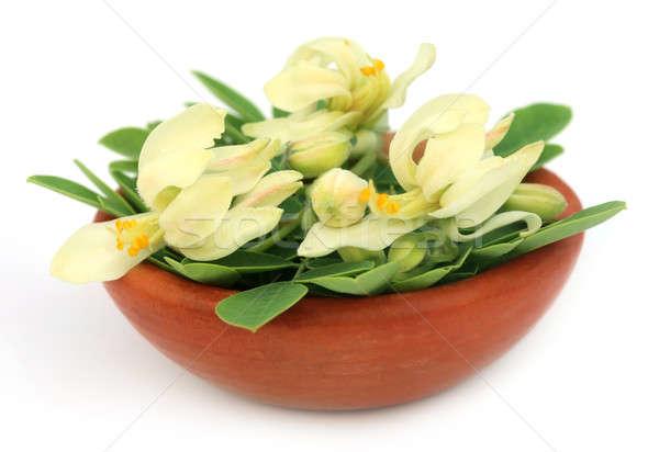 Comestível flor folhas marrom tigela branco Foto stock © bdspn