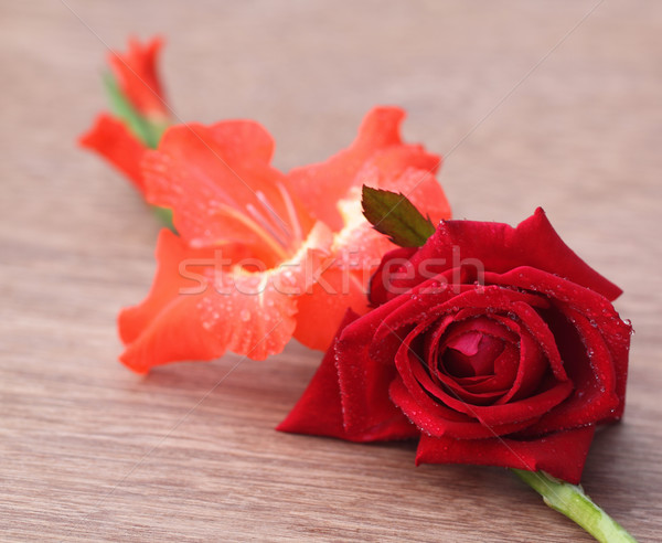 Gladiolus flower with rose  Stock photo © bdspn