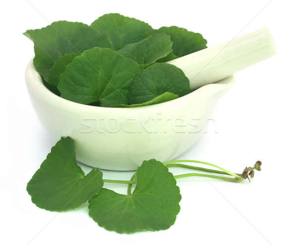 Thankuni leaves with mortar and pestle Stock photo © bdspn