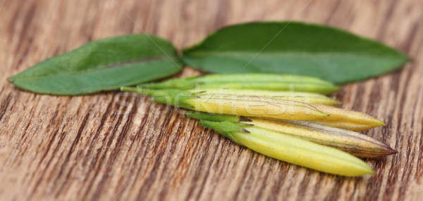 Chirata leaves with pods Stock photo © bdspn