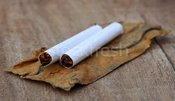 Dried tobacco leaves with cigarette Stock photo © bdspn