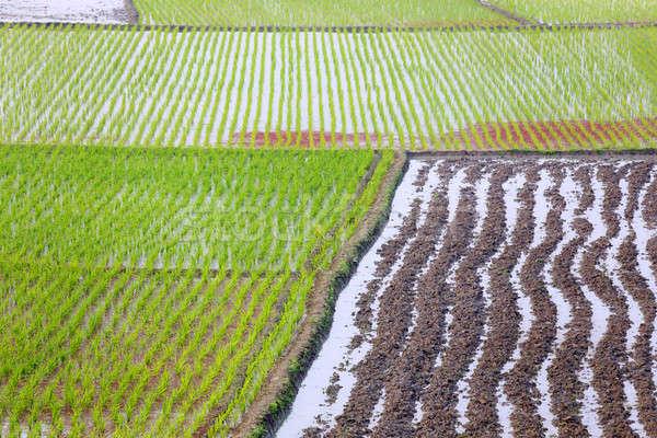 Megművelt föld Banglades fű mező zöld Stock fotó © bdspn