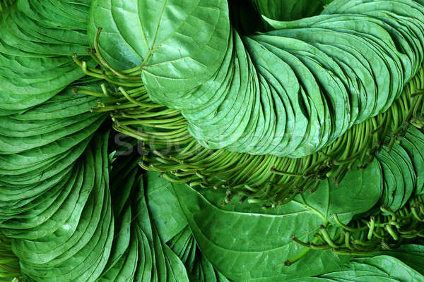 Betel leaf of Indian subcontinent Stock photo © bdspn