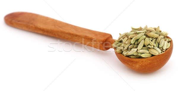 Rezene tohumları beyaz pişirme Hint Stok fotoğraf © bdspn